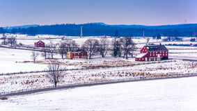 View of red barns and snow-covered farm fields from Longstreet T Stock Image