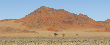 View of red dunes in the Namib Desert, Sossusvlei, Namibia. View of red dunes in  in the Namib Desert, in Sossusvley, in the Namib-Naukluft National Park of Stock Photos