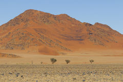 View of red dunes in the Namib Desert, Sossusvlei, Namibia. View of red dunes in  in the Namib Desert, in Sossusvley, in the Namib-Naukluft National Park of Stock Image