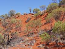 View of the red earth of the outback of Australia Stock Photos