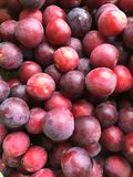 A view of Red Plum royalty free stock photography