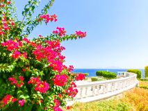 View of the Red Sea and southern pink flowers at the resort of Sharm El Sheikh in Egypt Royalty Free Stock Images