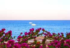 View of the Red Sea and southern pink flowers at the resort of Sharm El Sheikh in Egypt Royalty Free Stock Photo