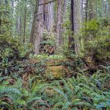 Jedediah Smith Redwoods State Park Royalty Free Stock Images