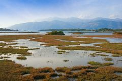 View of reserve Solila - swamp area of coastal part of Bay of Kotor. Tivat, Montenegro Stock Photography