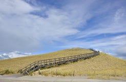 Dune Restoration Royalty Free Stock Image