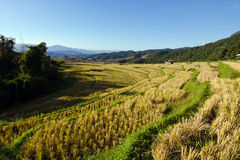 View of rice farm and cloudy blue sky by local people in mountai Stock Photography