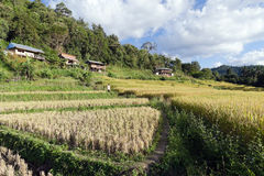 View of rice farm and cloudy blue sky by local people in mountai Royalty Free Stock Images