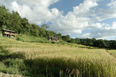 View of rice farm and cloudy blue sky by local people in mountai Stock Image