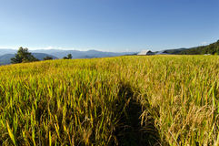 View of rice farm and cloudy blue sky by local people in mountai Royalty Free Stock Photography