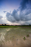 View of rice field. And clouds in morning and evening time , Thailand stock images