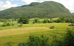 View of rice field. With green hill background in Pai, Mae Hong Son Stock Photos