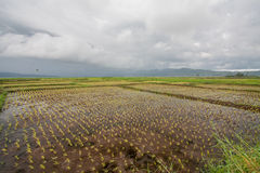 View of the The rice field / Landscape. / Indonesia stock image