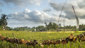 View of rice fields in Bali Stock Images