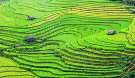 View of the rice fields at Lao Chai village in Laocai province, northern Vietnam Royalty Free Stock Photo