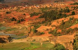 Rice fields in Madagascar. View of rice fields in Madagascar royalty free stock images
