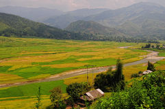View of the rice fields at Tule valley in Moc Chau, northern Vietnam Royalty Free Stock Image