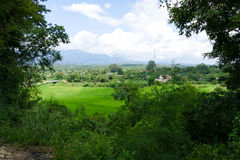 View of rice paddy field, forest and mountain Royalty Free Stock Images