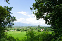 View of rice paddy field, forest and mountain Royalty Free Stock Photography