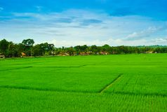 View of rice terrace field in tropical island in East Asia stock photo