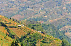 View of rice terraced field on mountain Stock Photography