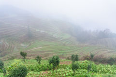 view of rice terraced fields in fog Stock Images