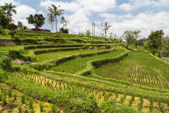 View of rice terraces in Bali with water  flowing Stock Photos