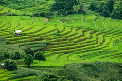 View of rice terraces at Bong Piang forest in Chiang Mai, Thailand. Beautiful view of rice terraces at Bong Piang forest in Chiang Mai, Thailand Stock Images