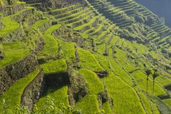 Rice terraces in Banaue the Philippines Stock Image