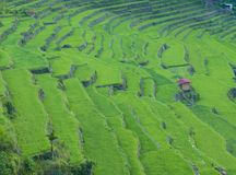 Rice terraces in Banaue the Philippines Royalty Free Stock Photo