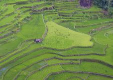 Rice terraces in Banaue the Philippines Royalty Free Stock Images