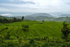 View of rice terraces in rainy day at Bong Piang forest in Chiang Mai, Thailand. Beautiful view of rice terraces in rainy day at Bong Piang forest in Chiang Mai royalty free stock photography
