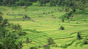 View of rice terraces stock video footage