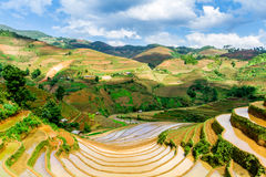 View of rice terraces viewed from a mountain peak. Royalty Free Stock Image