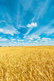 View on ripe wheat field Royalty Free Stock Images