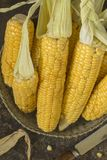 Corn. View of the ripped and ripe cob of corn Stock Photo