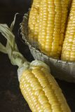 Corn. View of the ripped and ripe cob of corn Royalty Free Stock Photo