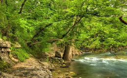 View of river bank. Shot of calm river flowing under green trees next to rocky river bank Royalty Free Stock Images
