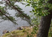 Trees on the steep rocky shore of the lake Royalty Free Stock Photos