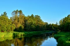 View of the river in the forest area on a summer day. Travel to Belarus, the river Bobr royalty free stock photography