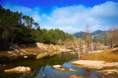 View of  river with forest riverside Royalty Free Stock Photo