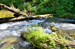 View of the River Great Estyube with fallen trees after Hurrican Royalty Free Stock Photos
