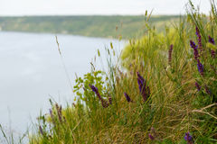 A view of river and hill. In the foreground grass and flowers. Photo stock images