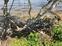 View of river shoreline in Fort Myers, Florida, USA Royalty Free Stock Photos