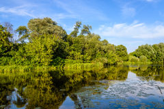 View of the river. Summer warm evening. View of the river, the banks of which is densely overgrown with bushes. Reflection of blue sky in the river water Stock Photography
