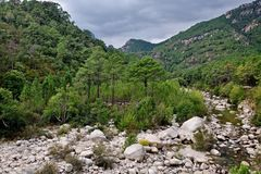 Corsica-river  Vacca Stock Photography