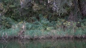 View of river vegetation from a boat. View of river vegetation from a floating boat boats. Slow motion stock video