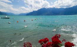 View of  riviera 's Lake Geneva  at Vevey Stock Photography
