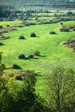 Green field, top view. View of the road from above Stock Image