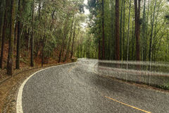 View of the road with car trace. Stock Image
